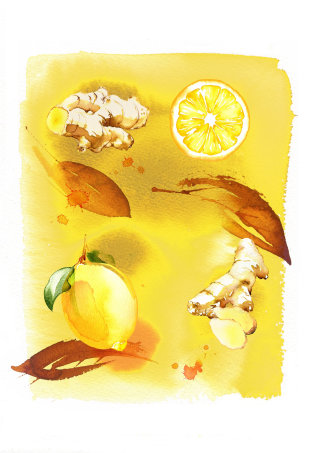 Lemon ginger watercolor illustration