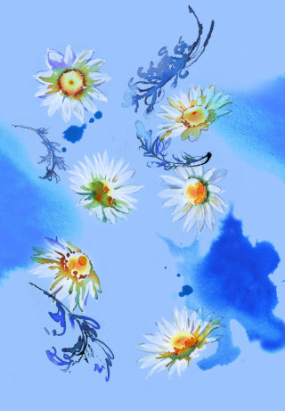 Camomile flowers painting by UK based illustrator