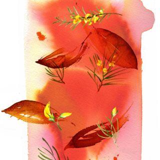 Line art of SAINSBURYS Roobois Tea