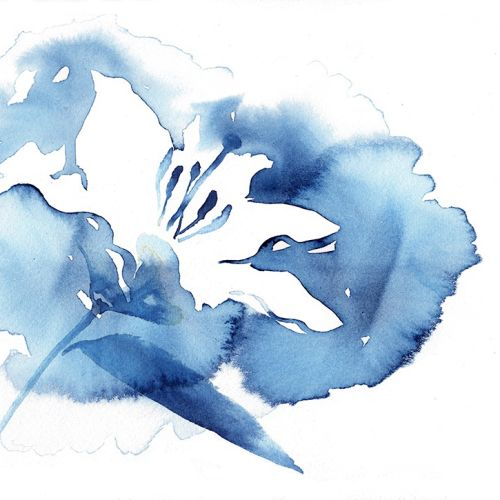 Melvita floral's illustration