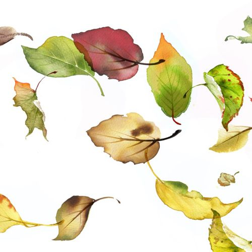 catalogue illustration of  Falling autumnal leaves