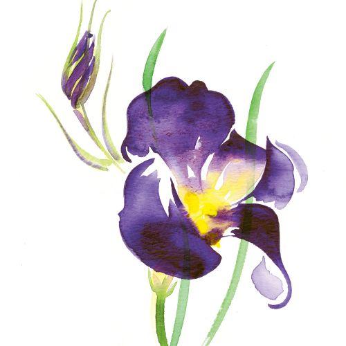 Illustration for BELLA FLORA cards by Katharine Asher