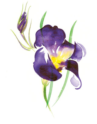 Illustration for BELLA FLORA cards by Katharine Asher