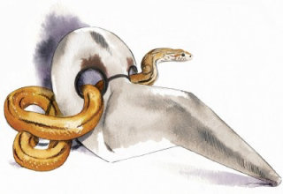 Snake and skelton illustration by Katharine Asher
