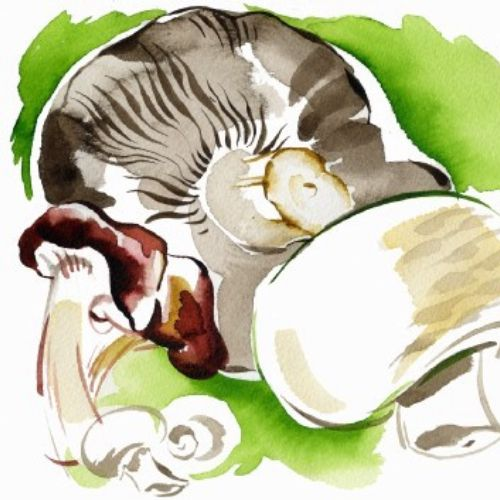 Mushrooms illustration by Katharine Asher