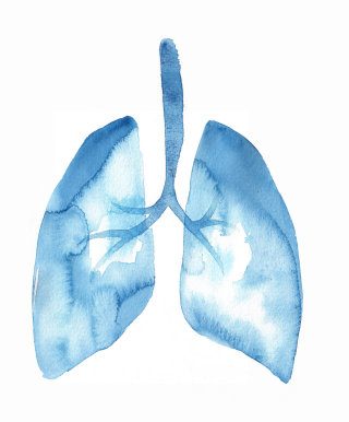 Lungs Illustration | Medical illustration collection