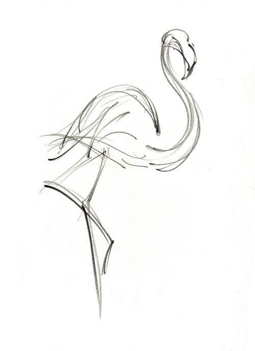 FLAMINGO Bristol Zoo pencil made illustration