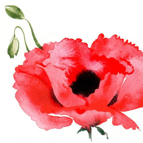 Illustration of REMEMBRANCE DAY STAMPS Jersey Post 2014 by Katharine Asher
