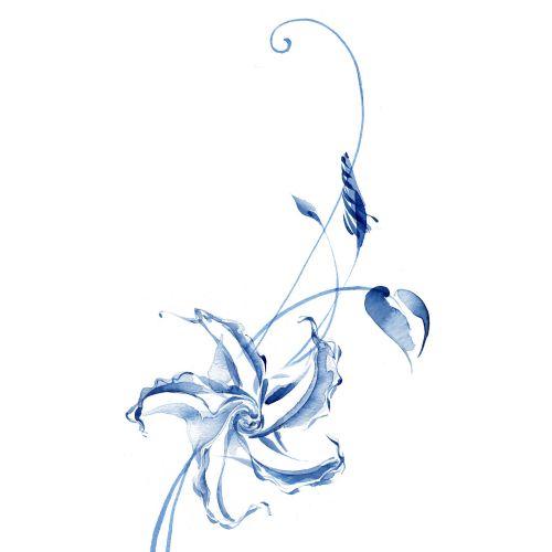 Moonflower illustration by Katharine Asher
