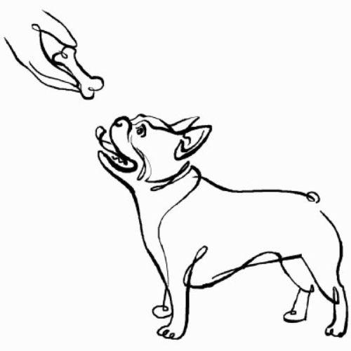 My Dog Bunny Illustration