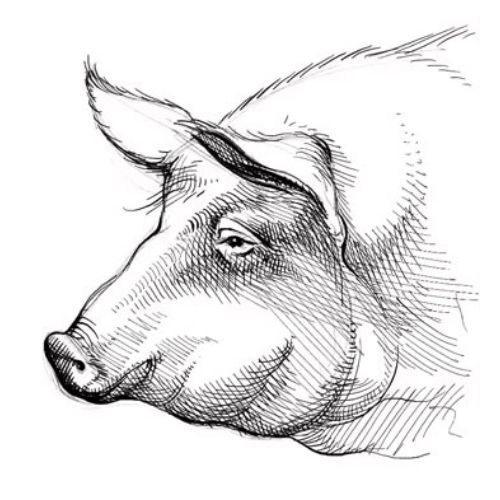 How to draw a pig children animation