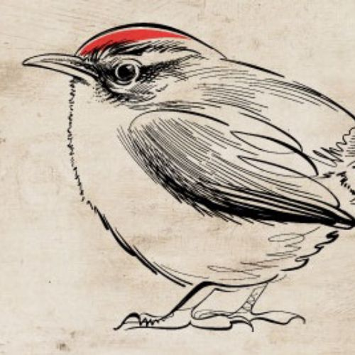 Gif animation of wren bird