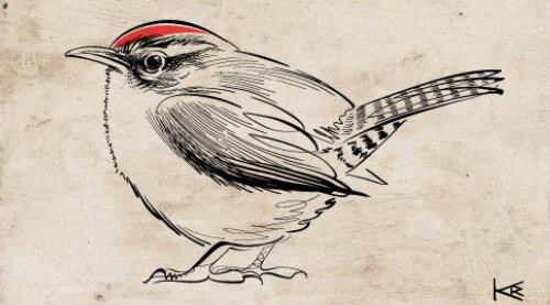 Gif animation of wren bird