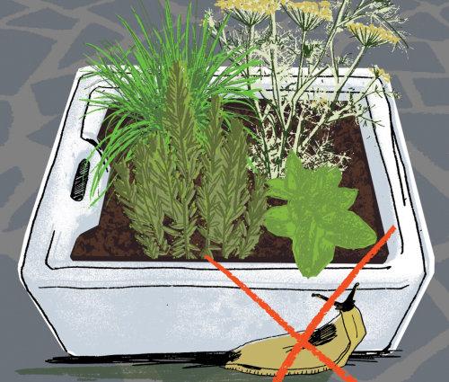 Una ilustración de planta en maceta