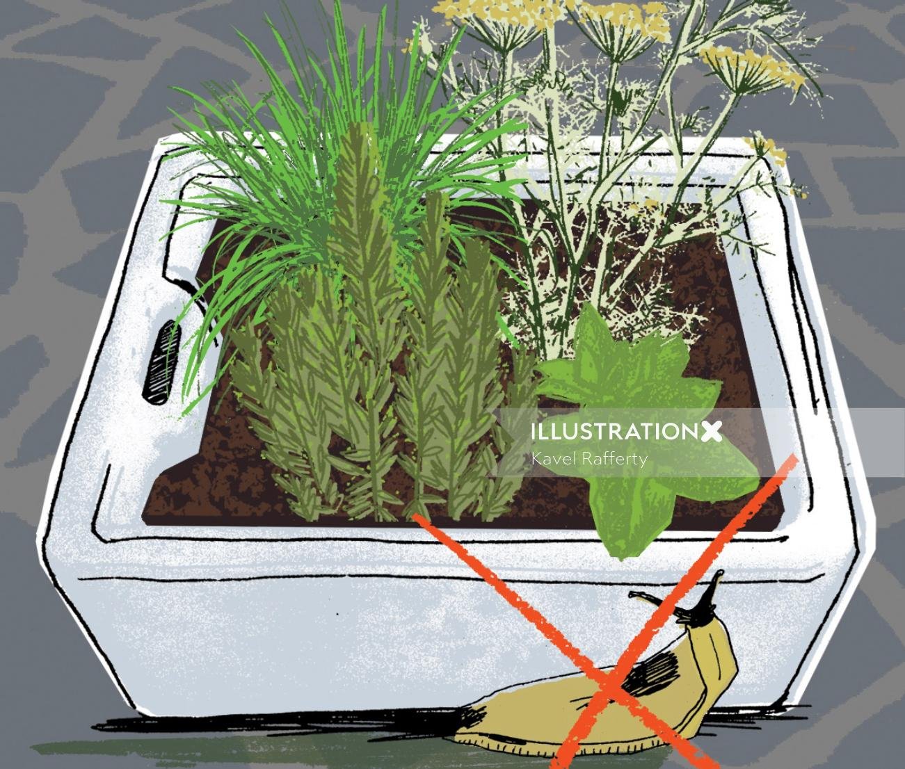 An illustration of plant in pot