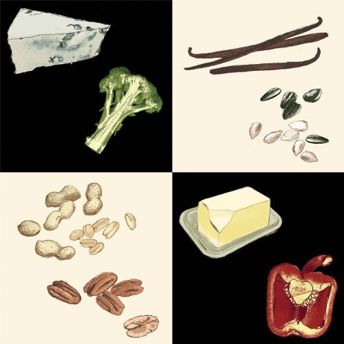 Ingredients food illustration