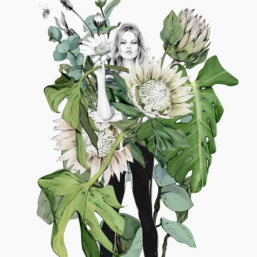 Botanical illustration by Kelly Smith