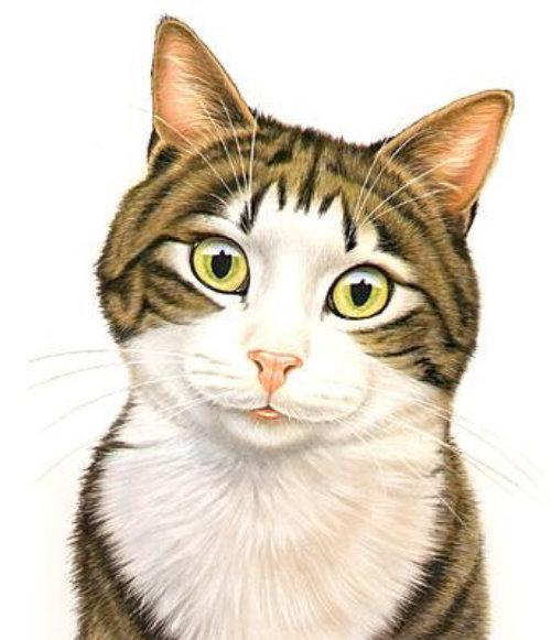 smily illustration of tabby cat