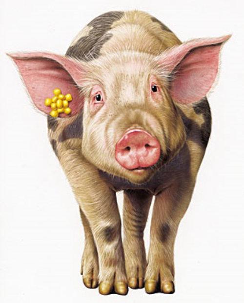 3d art of pig