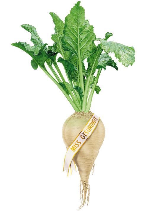 Sugar Beet with greeny leaves