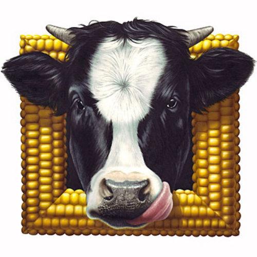 Fram de milho com cara de vaca