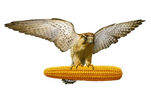 Graphic illustration of falcon with corn cob