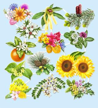 Knut Maibaum illustrator - flowers illustration