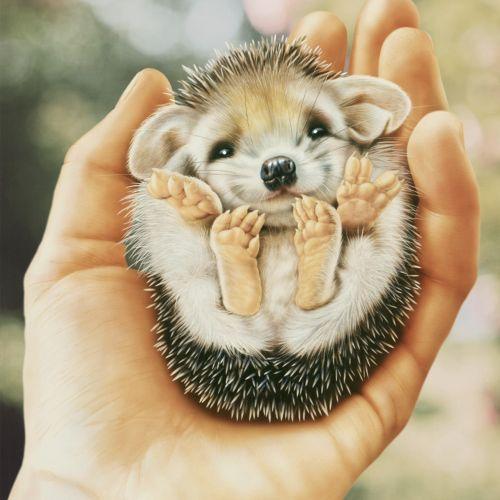 Knut Maibaum Animals Illustrator from Germany