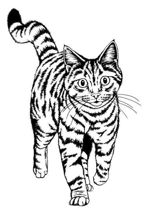 pé de gato preto e branco