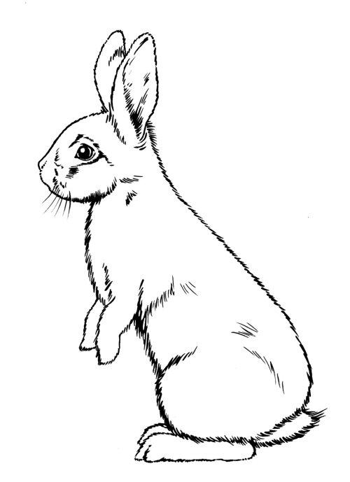 Line art of rabbit