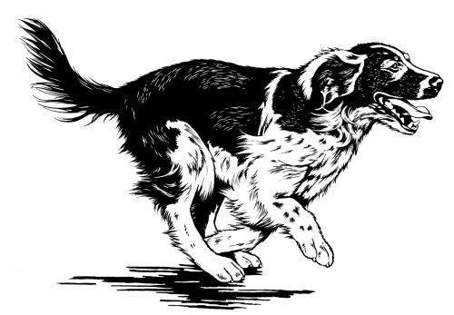 Black and white laufender Hund running