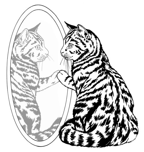 Cat seeing in mirror