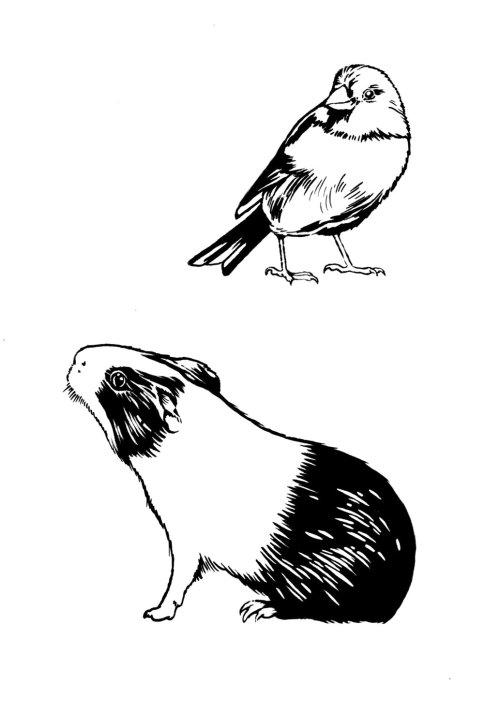 Arte de linha de sparro e coelho