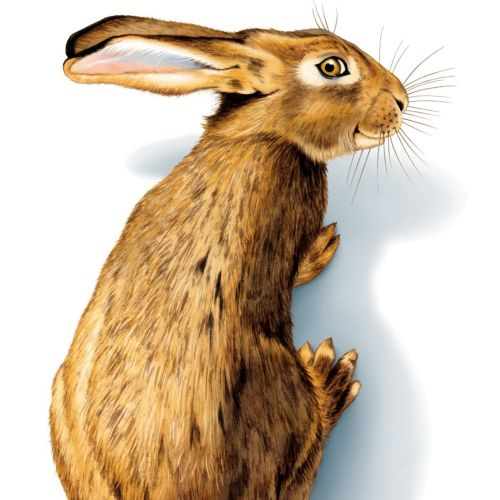 3d illustration of rabbit