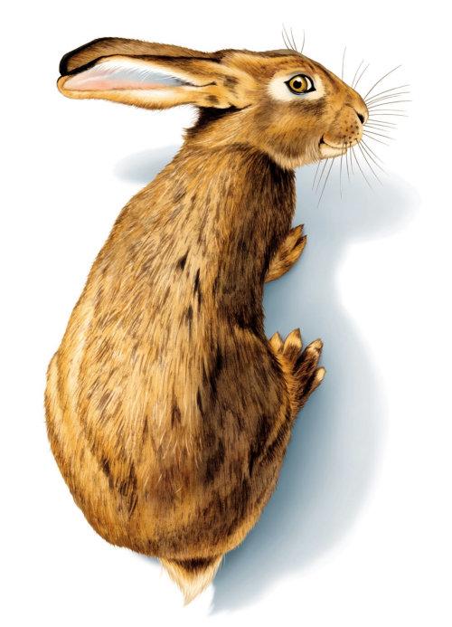 3d illustration of rabbit