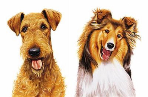 Diffeent dog breeds together