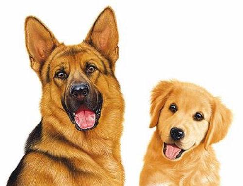 Cães sentados juntos