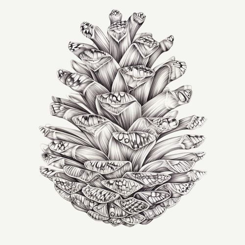 Pencil drawing of flower boket