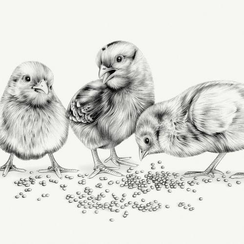 Lauren Mortimer Animals Illustrator from UK