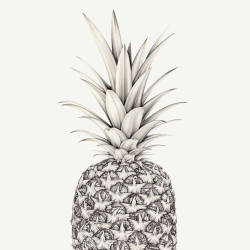 Pineapple - Pencil drawing by Lauren Mortimer