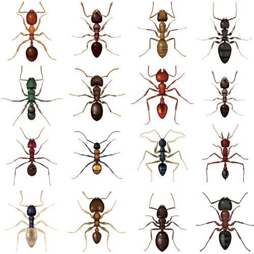 Illustration of Ants