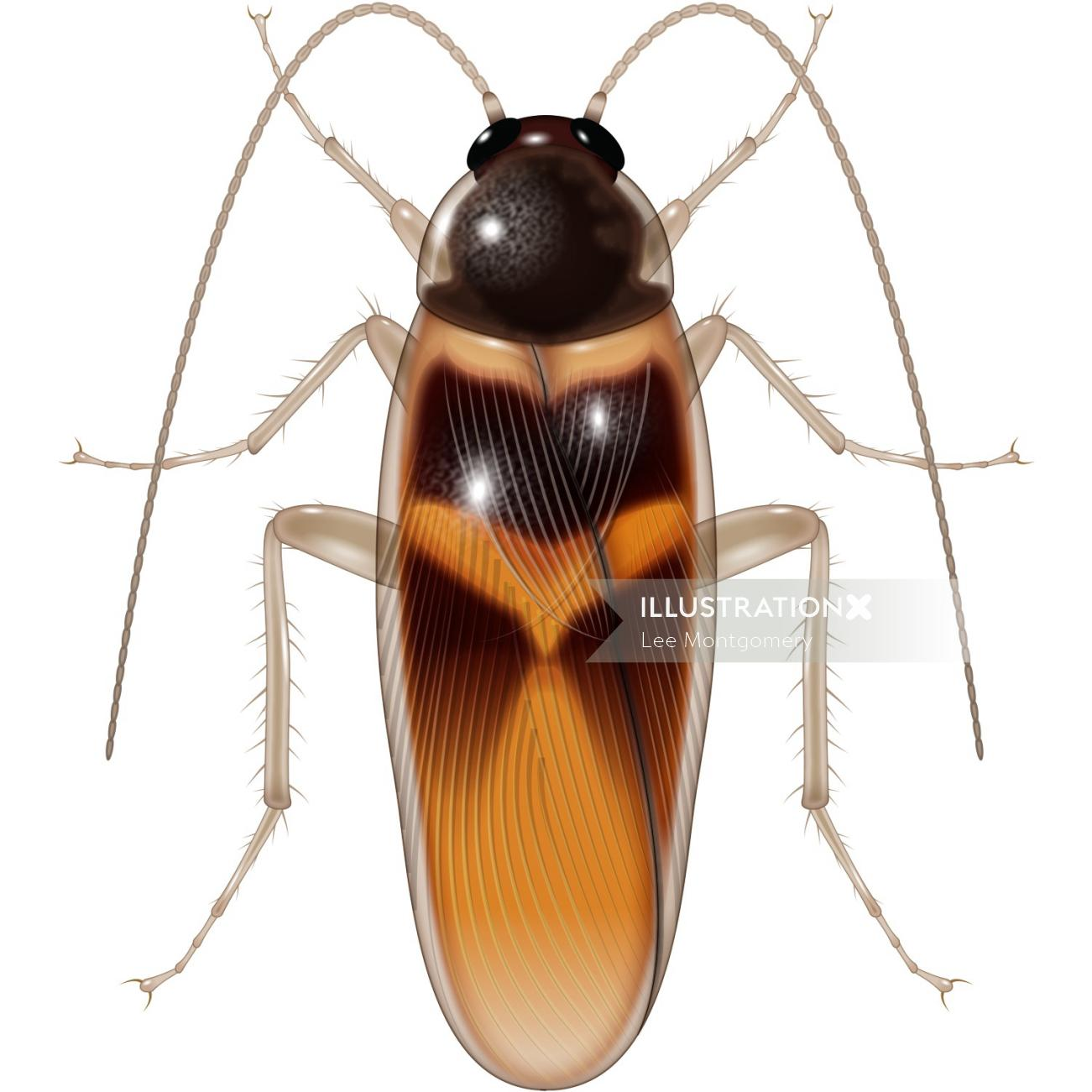 Illustration of Adult cockroach