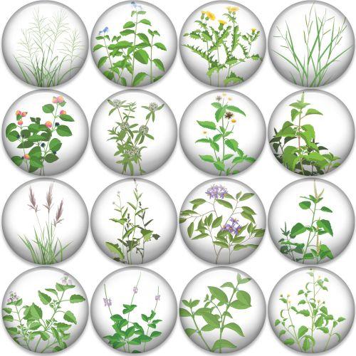 Illustration of plant icons