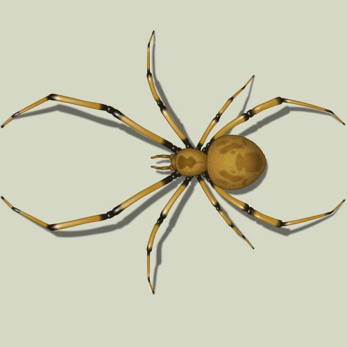 Generic Spider