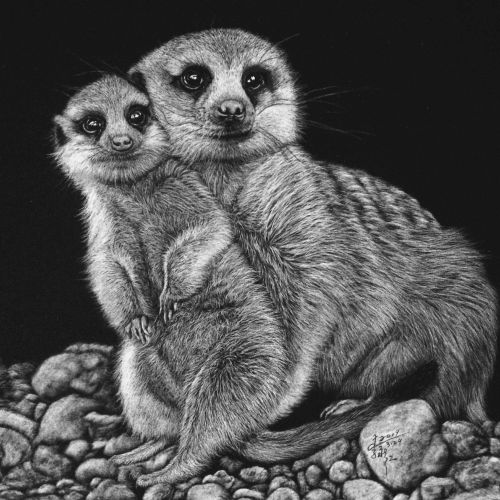 Meerkat animal illustration
