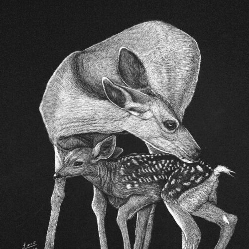 Black buck love black and white drawing