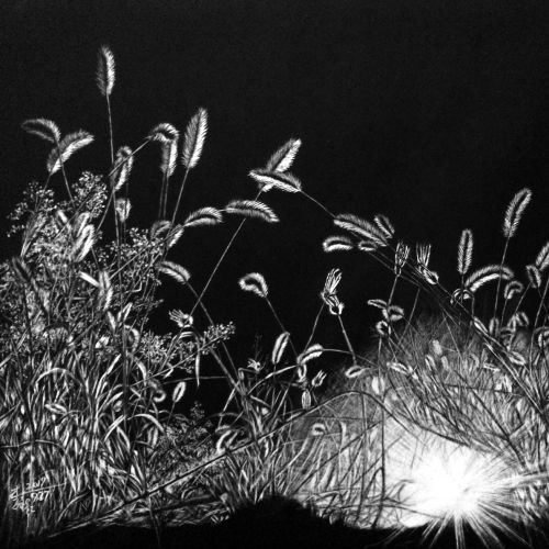 Black and white illustration of shining night