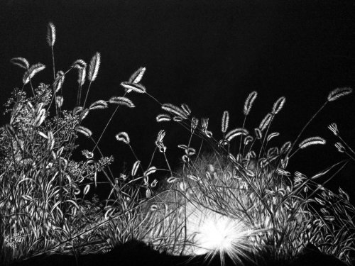 Black and white illustration of shining night