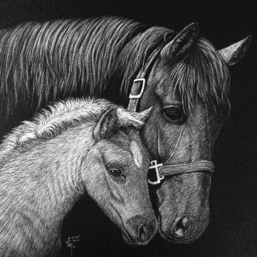 Illustration animale de crinière de cheval