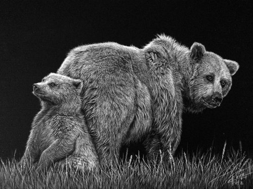 Animal illustration of Grizzly bear